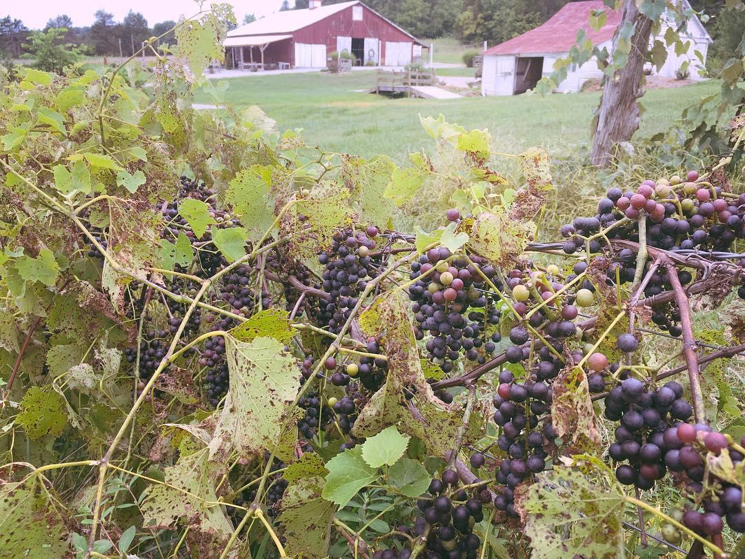 Dodson Orchards